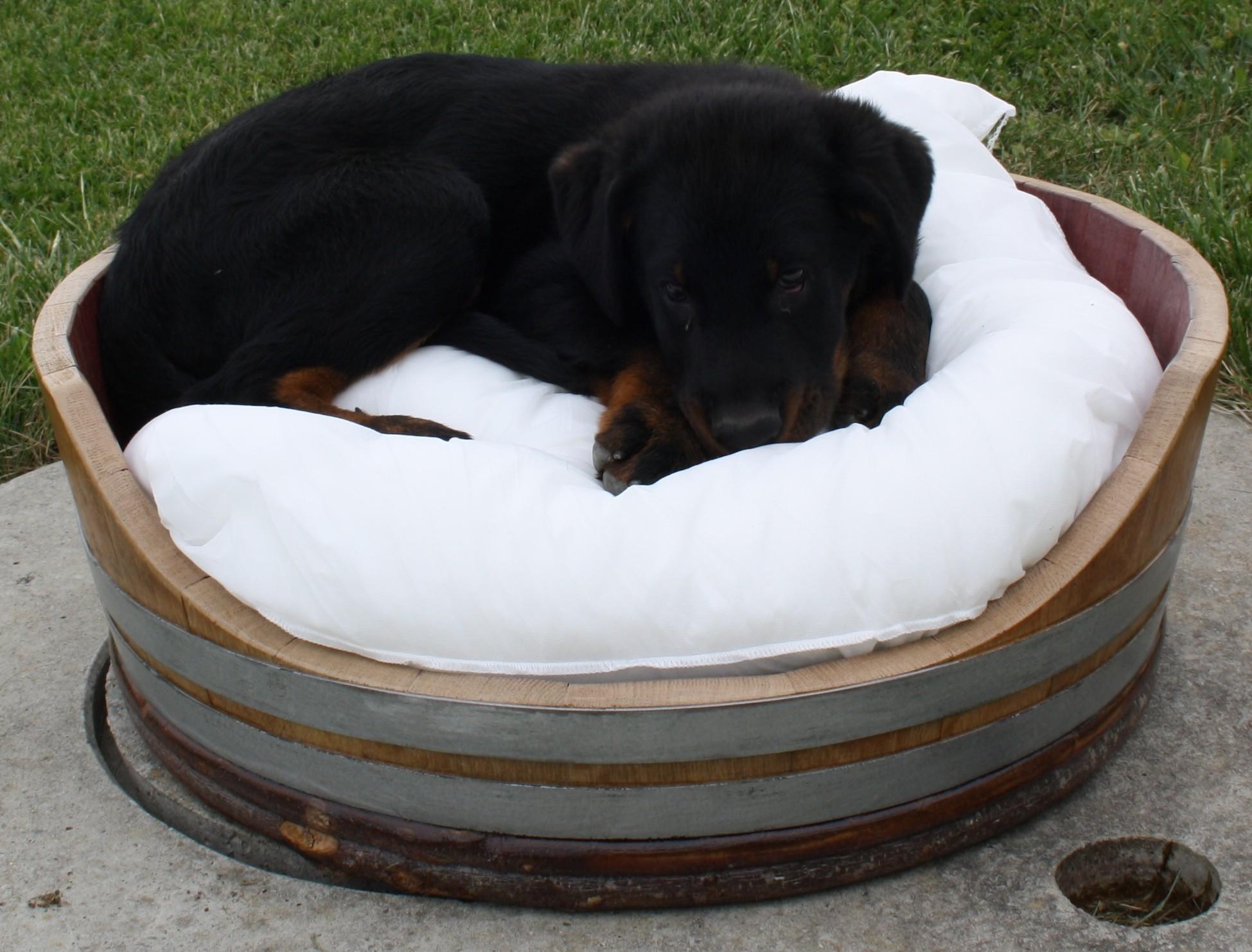 panier chiens fashion designs. Black Bedroom Furniture Sets. Home Design Ideas